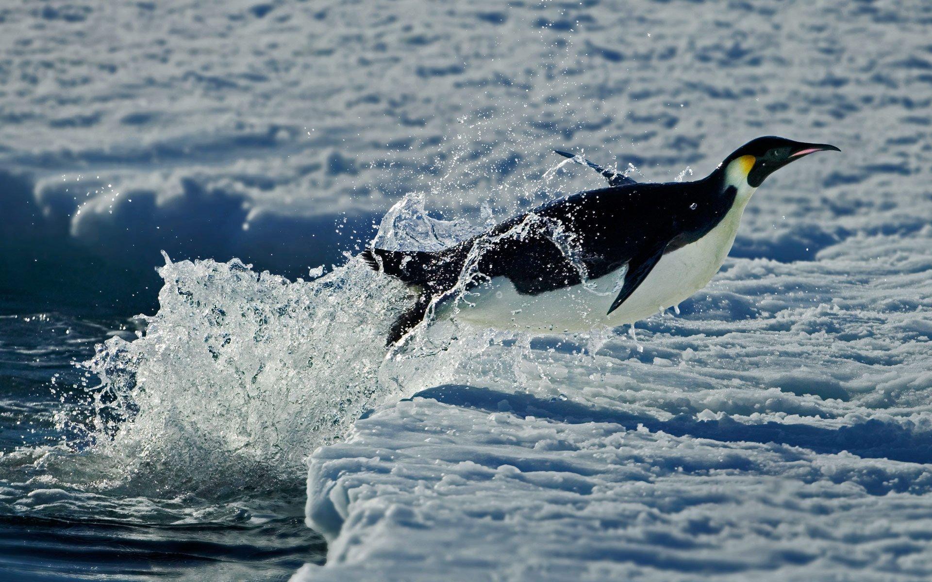 萌宠动物,极地物种,企鹅