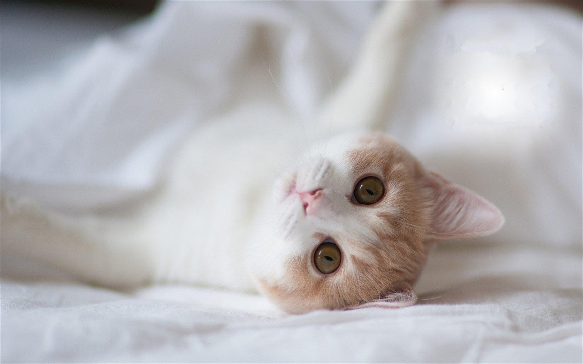 萌宠动物,卖萌图,猫,可爱
